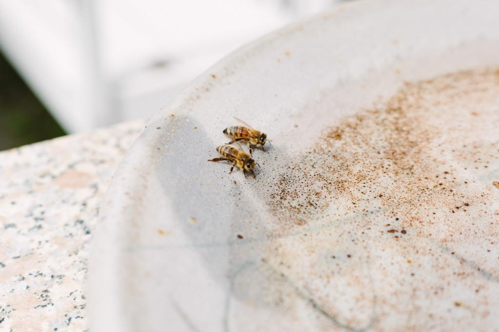 Trinkende Bienen, Essen